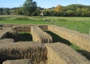Hay_maze_-_Home_Farm_-_geograph.org.uk_-_1043014